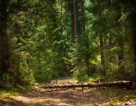 ВЗубаревском лесу обнаружили тело новорожденного ребенка